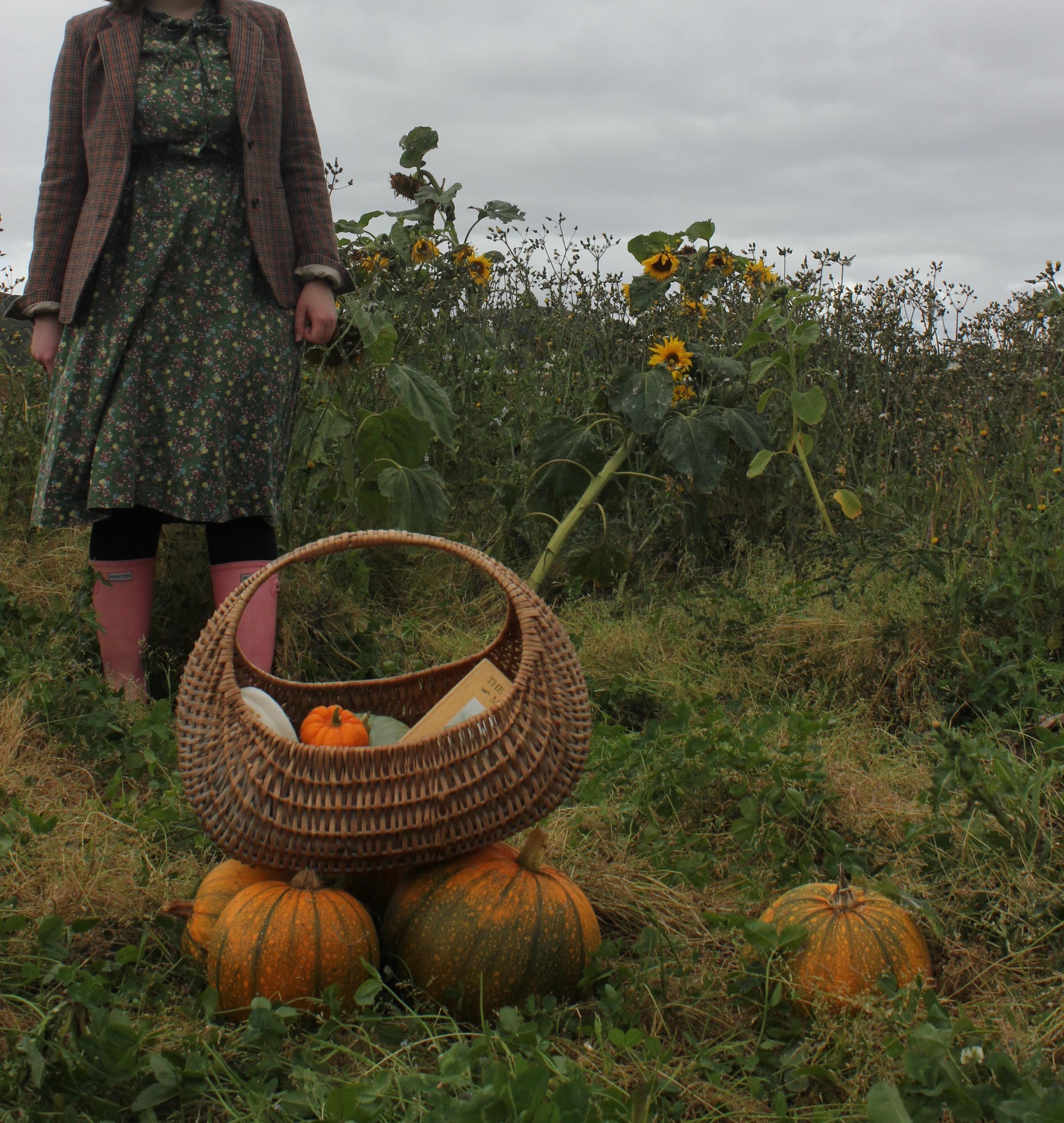 The Pumpkin Patch Kilduff Farm
